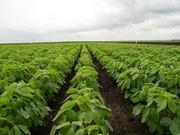 Оригинальные средства защиты растений и микроудобрений