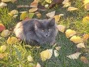 Чудесные котята ищут дом и любящих хозяев