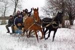 Лошади и пони!