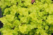 Декоративные растения по низким ценам