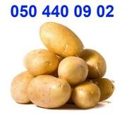 картофель посадочный семенной купить