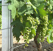Опоры для садов и виноградников