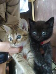 отдам трех котят в добрые заботливые руки