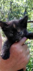 маленькие котята хотят попасть в хорошие руки