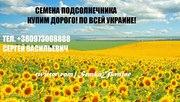 подсолнечник семочка семка насіння соняшника