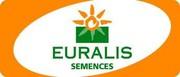 Семена подсолнечника Евралис (Euralis semences)
