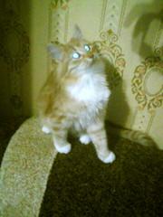 отдам рыжего котёнка