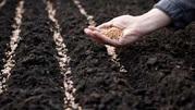 В больших объемах закупаем зерновые и масличные,  дорого