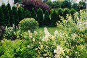 Озеленение,  благоустройство територии,  ландшафтный дизайн