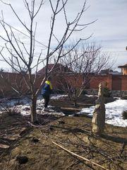 Обрезка плодовых деревьев, чистка сада,  обрезка кустов